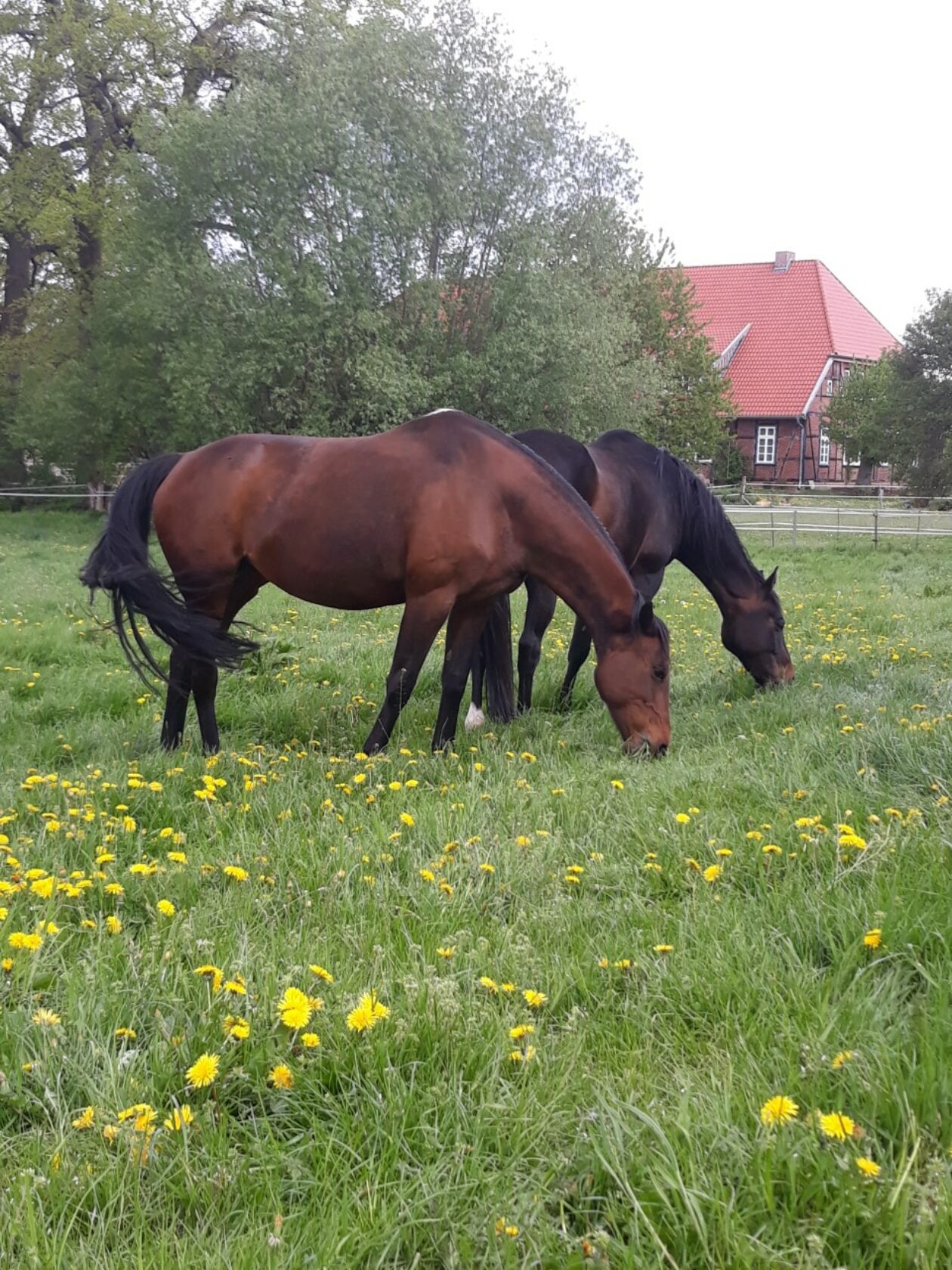 Pferdefreunds-Futterspiele